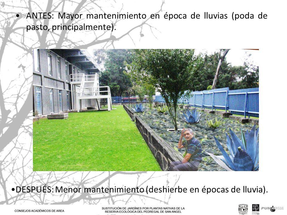 ANTES: Mayor mantenimiento en época de lluvias (poda de pasto, principalmente). DESPUÉS: Menor mantenimiento (deshierbe en épocas de lluvia).