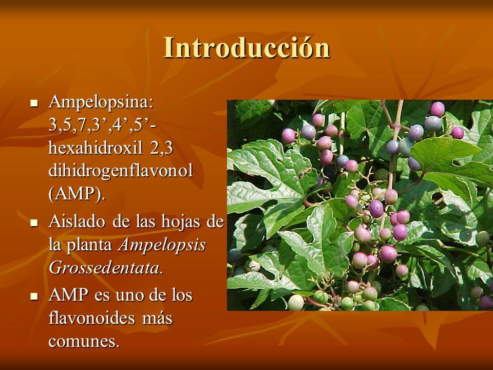 Introducción Ampelopsina: 3,5,7,3,4,5- hexahidroxil 2,3 dihidrogenflavonol (AMP). Ampelopsina: 3,5,7,3,4,5- hexahidroxil 2,3 dihidrogenflavonol (AMP).