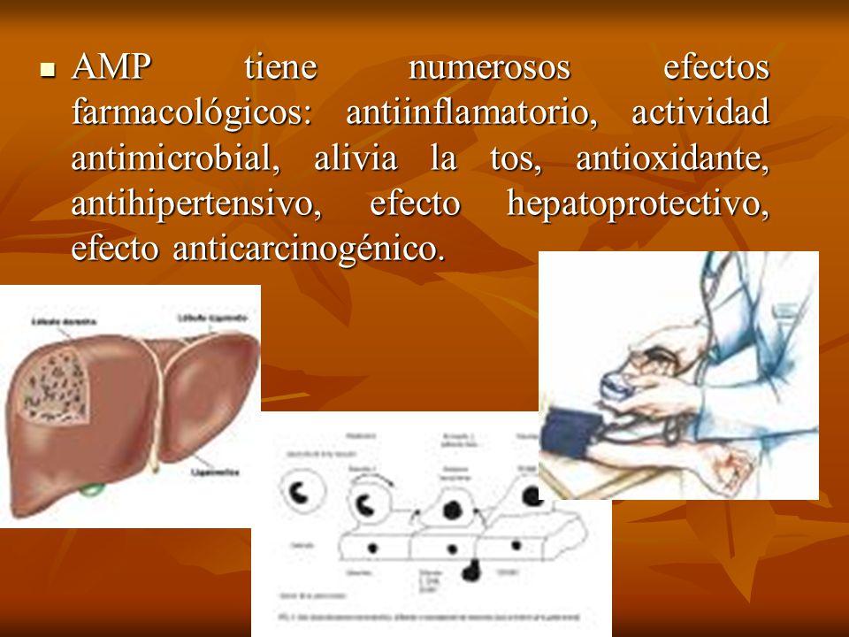 AMP tiene numerosos efectos farmacológicos: antiinflamatorio, actividad antimicrobial, alivia la tos, antioxidante, antihipertensivo, efecto hepatopro