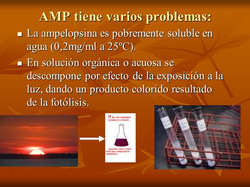 AMP tiene varios problemas: La ampelopsina es pobremente soluble en agua (0,2mg/ml a 25ºC). La ampelopsina es pobremente soluble en agua (0,2mg/ml a 2