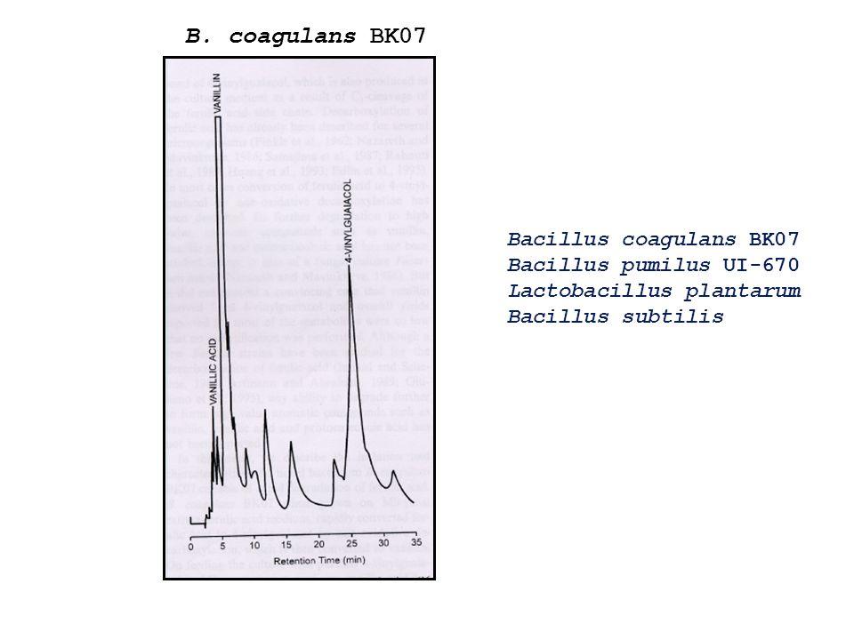 Bacillus coagulans BK07 Bacillus pumilus UI-670 Lactobacillus plantarum Bacillus subtilis B. coagulans BK07