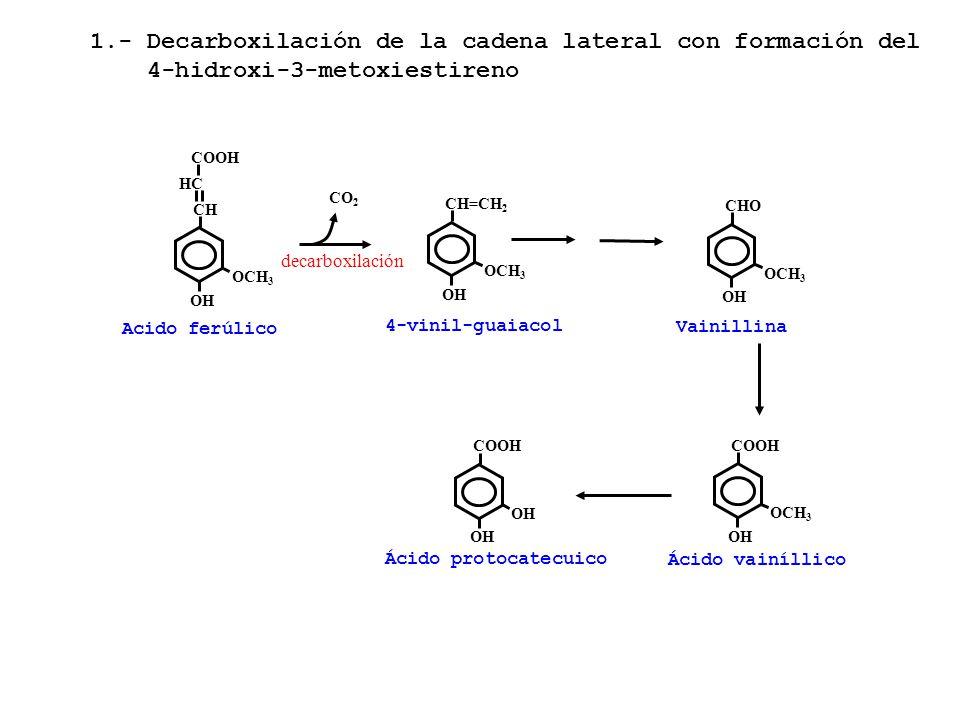Acido ferúlico OCH 3 CHCH OH HCHC COOH OCH 3 CH=CH 2 OH 4-vinil-guaiacol OCH 3 CHO OH Vainillina decarboxilación OH COOH OH Ácido protocatecuico OCH 3