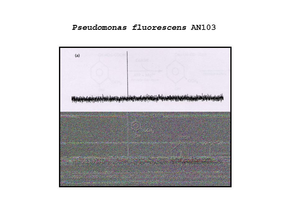 Pseudomonas fluorescens AN103