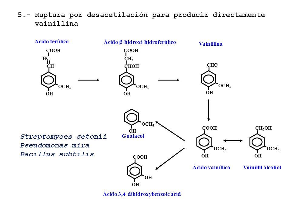Acido ferúlico OCH 3 CHCH OH HCHC COOH OCH 3 CHOH OH COOH CH2CH2 Ácido -hidroxi-hidroferúlico OCH 3 CHO OH Vainillina OCH 3 COOH OH Ácido vainíllico O