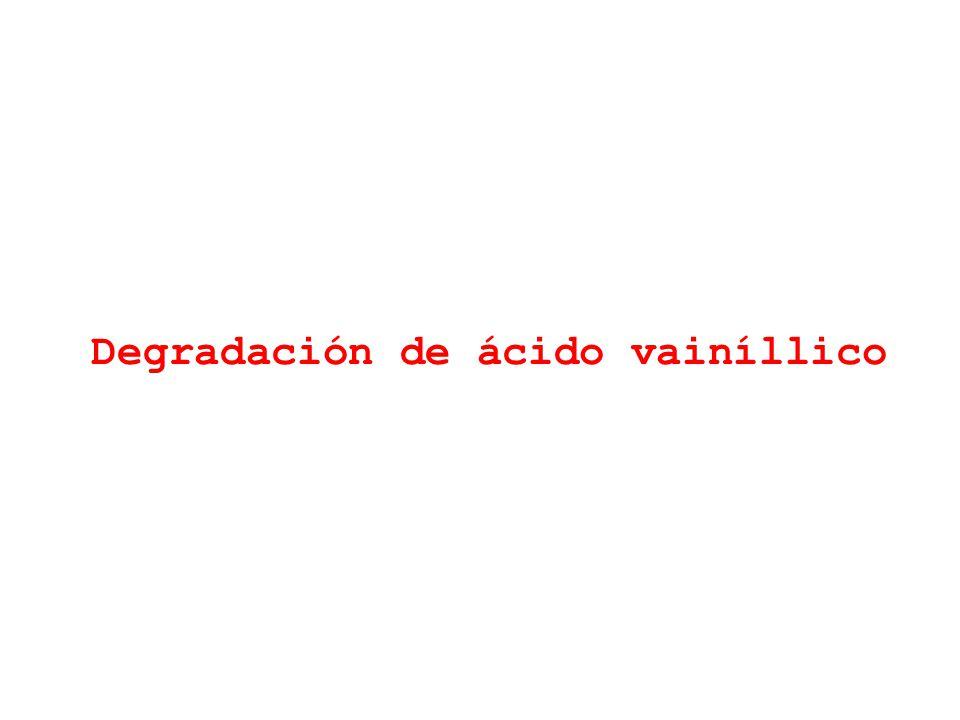 Degradación de ácido vainíllico