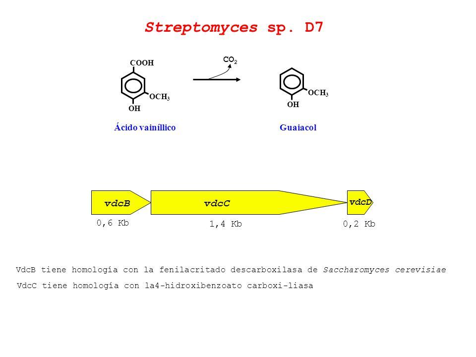 OCH 3 COOH OH Ácido vainíllico OCH 3 OH Guaiacol Streptomyces sp. D7 vdcBvdcC vdcD 0,6 Kb 1,4 Kb0,2 Kb VdcB tiene homología con la fenilacritado desca