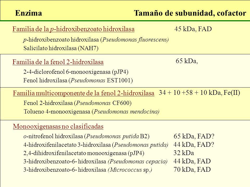 Familia de la p-hidroxibenzoato hidroxilasa Tamaño de subunidad, cofactorEnzima 45 kDa, FAD p-hidroxibenzoato hidroxilasa (Pseudomonas fluorescens) Sa
