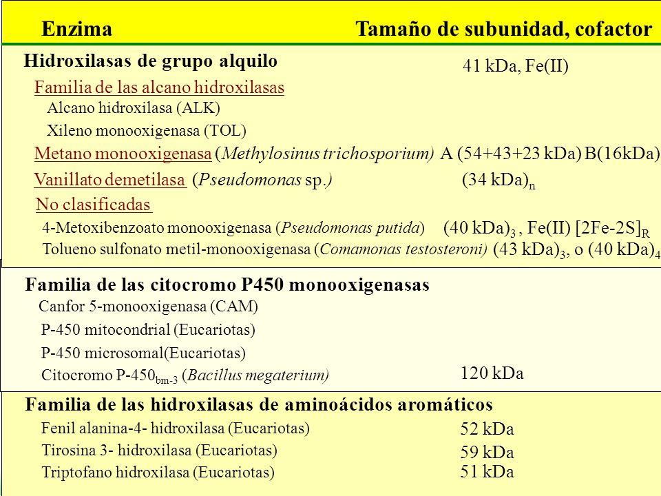 Familia de las alcano hidroxilasas Tamaño de subunidad, cofactorEnzima 41 kDa, Fe(II) Alcano hidroxilasa (ALK) Xileno monooxigenasa (TOL) Metano monoo