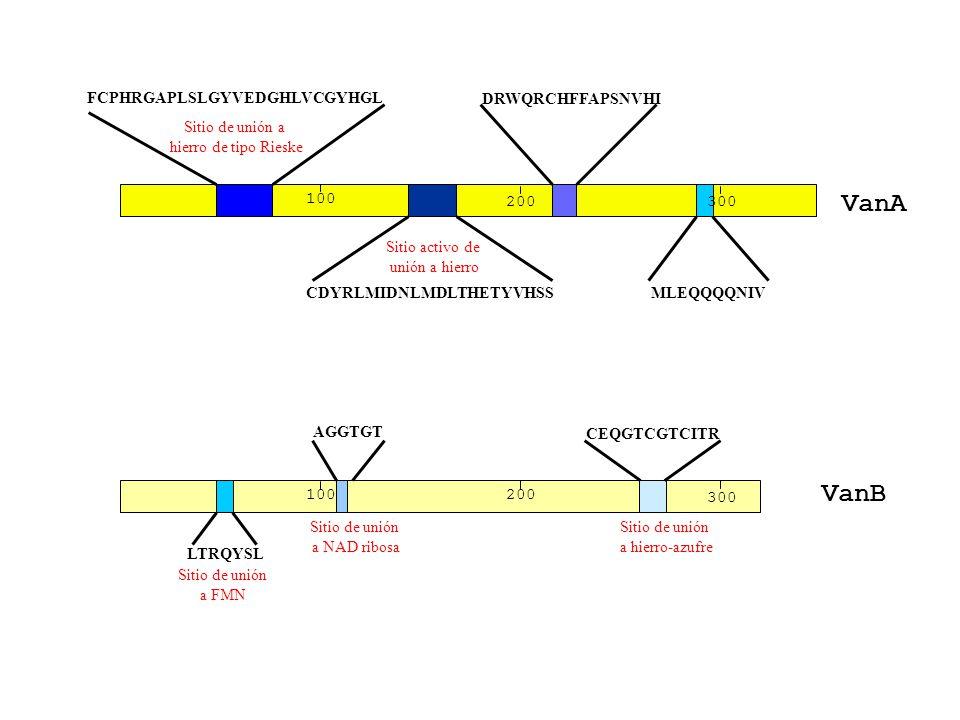 200 100 FCPHRGAPLSLGYVEDGHLVCGYHGL CDYRLMIDNLMDLTHETYVHSS DRWQRCHFFAPSNVHI MLEQQQQNIV Sitio de unión a hierro de tipo Rieske Sitio activo de unión a h