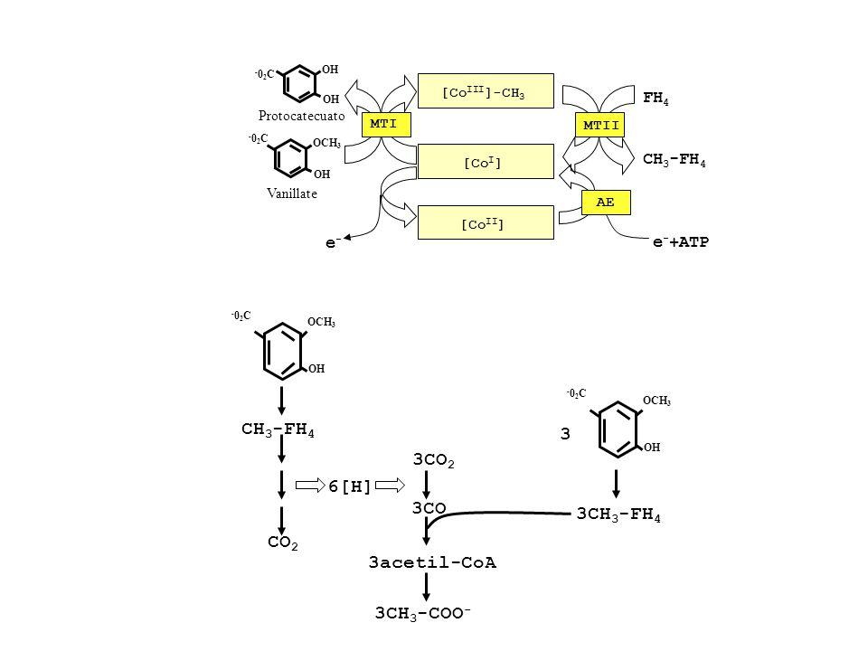 -02C-02C OH OCH 3 Vanillate OH -02C-02C Protocatecuato [Co III ]-CH 3 [Co I ] FH 4 CH 3 -FH 4 [Co II ] e-e- e - +ATP AE MTII MTI -02C-02C OH OCH 3 CH