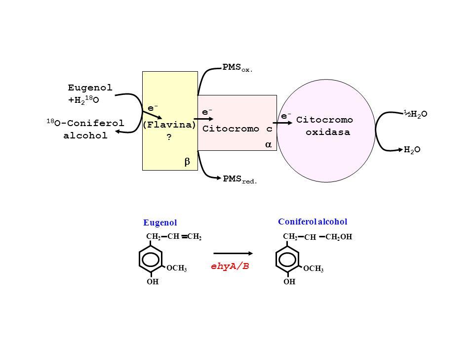 Eugenol +H 2 18 O 18 O-Coniferol alcohol (Flavina) ? e-e- e-e- Citocromo c PMS ox. PMS red. Citocromo oxidasa e-e- ½H 2 O H2OH2O OCH 3 OH CH2CH2 Eugen