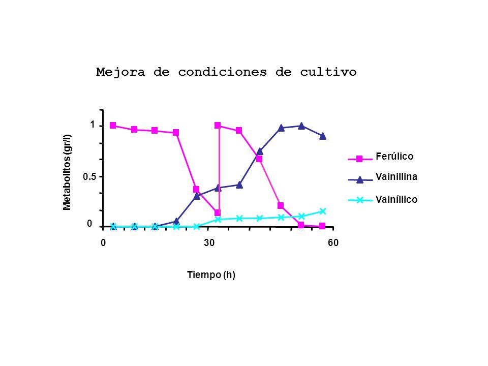 0 1 0.5 0 3030 60 Ferúlico Vainillina Vainíllico Tiempo (h) Metabolitos (gr/l) Mejora de condiciones de cultivo