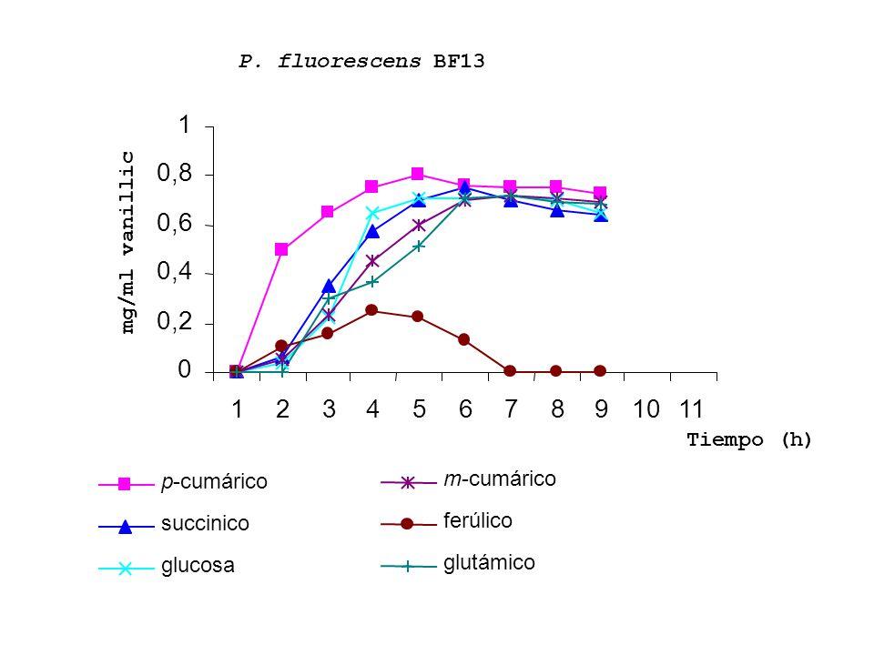 0 0,2 0,4 0,6 0,8 1 1234567891011 p-cumárico succinico glucosa m-cumárico ferúlico glutámico mg/ml vanillic Tiempo (h) P. fluorescens BF13