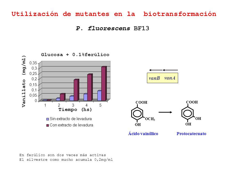 Utilización de mutantes en la biotransformación 0 0,05 0,1 0,15 0,2 0,25 0,3 0,35 12345 Sin extracto de levadura Con extracto de levadura Tiempo (hs)