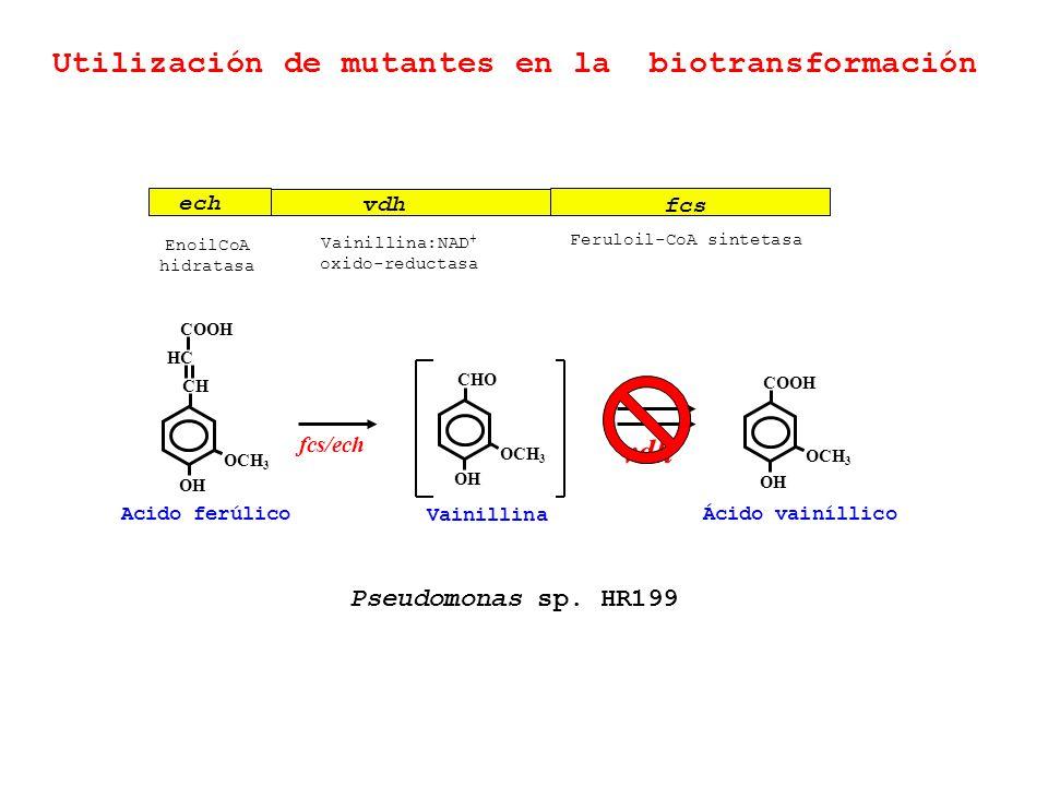 Utilización de mutantes en la biotransformación ech vdh fcs Feruloil-CoA sintetasa Vainillina:NAD + oxido-reductasa EnoilCoA hidratasa Acido ferúlico