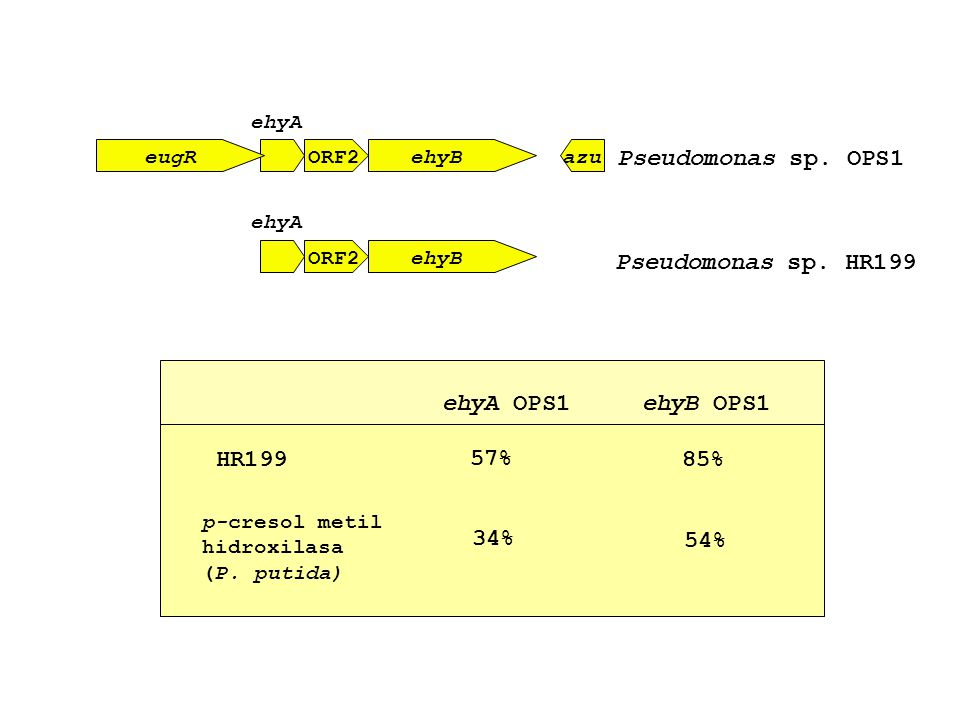 eugR ehyA ORF2ehyBazu Pseudomonas sp. OPS1 ehyA ORF2ehyB Pseudomonas sp. HR199 ehyB OPS1ehyA OPS1 HR199 57% 85% p-cresol metil hidroxilasa (P. putida)