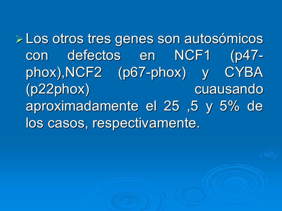 En pacientes con EGC hay susceptibilidad a la infección con microorganismos que normalmente tienen poca virulencia tales como Staphylococcus epidermidis, Serratia mercescens y Aspergillus.