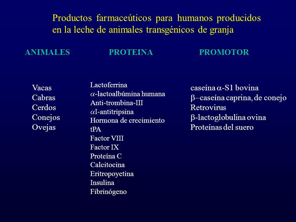 Productos farmaceúticos para humanos producidos en la leche de animales transgénicos de granja Lactoferrina -lactoalbúmina humana Anti-trombina-III I-