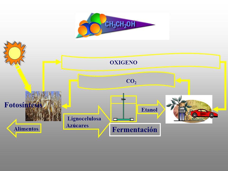 Lignocelulosa Azúcares Etanol Alimentos CO 2 OXIGENO Fotosíntesis Fermentación
