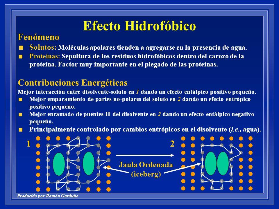 Producido por Ramón Garduño Efecto Hidrofóbico Fenómeno Solutos: Moléculas apolares tienden a agregarse en la presencia de agua.