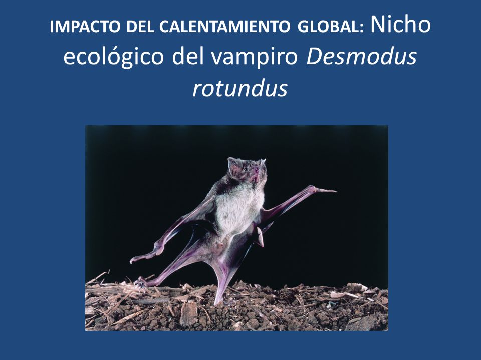 IMPACTO DEL CALENTAMIENTO GLOBAL: Nicho ecológico del vampiro Desmodus rotundus