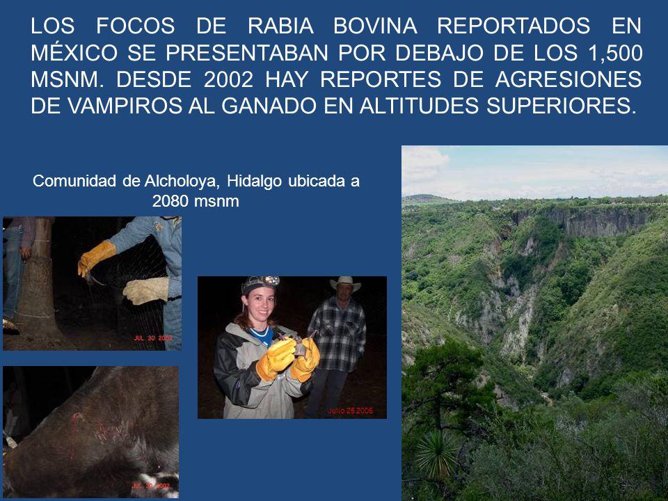 LOS FOCOS DE RABIA BOVINA REPORTADOS EN MÉXICO SE PRESENTABAN POR DEBAJO DE LOS 1,500 MSNM. DESDE 2002 HAY REPORTES DE AGRESIONES DE VAMPIROS AL GANAD