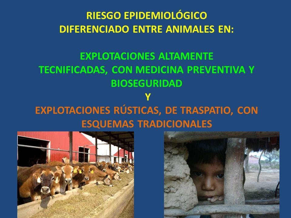 RIESGO EPIDEMIOLÓGICO DIFERENCIADO ENTRE ANIMALES EN: EXPLOTACIONES ALTAMENTE TECNIFICADAS, CON MEDICINA PREVENTIVA Y BIOSEGURIDAD Y EXPLOTACIONES RÚS