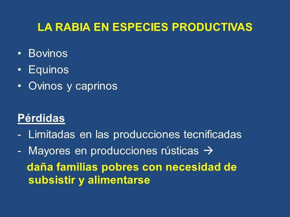 LA RABIA EN ESPECIES PRODUCTIVAS Bovinos Equinos Ovinos y caprinos Pérdidas -Limitadas en las producciones tecnificadas -Mayores en producciones rústi