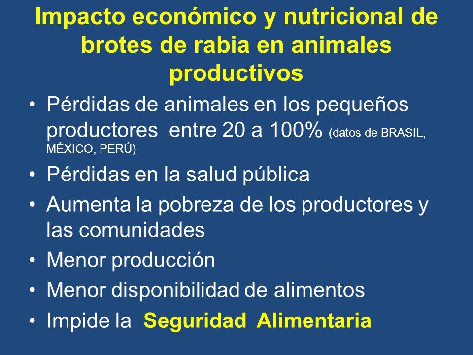 Impacto económico y nutricional de brotes de rabia en animales productivos Pérdidas de animales en los pequeños productores entre 20 a 100% (datos de