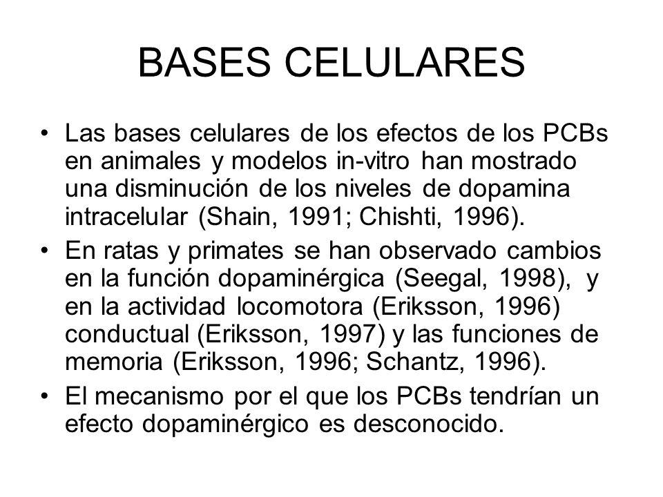 BASES CELULARES Las bases celulares de los efectos de los PCBs en animales y modelos in-vitro han mostrado una disminución de los niveles de dopamina