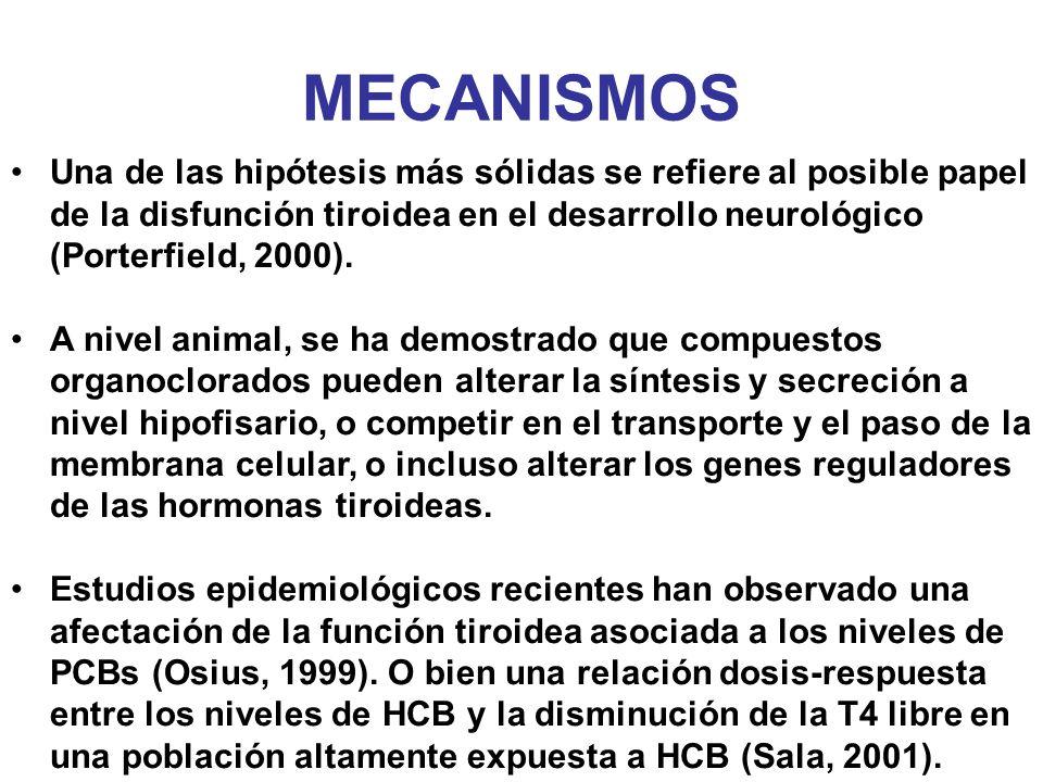 MECANISMOS Una de las hipótesis más sólidas se refiere al posible papel de la disfunción tiroidea en el desarrollo neurológico (Porterfield, 2000). A