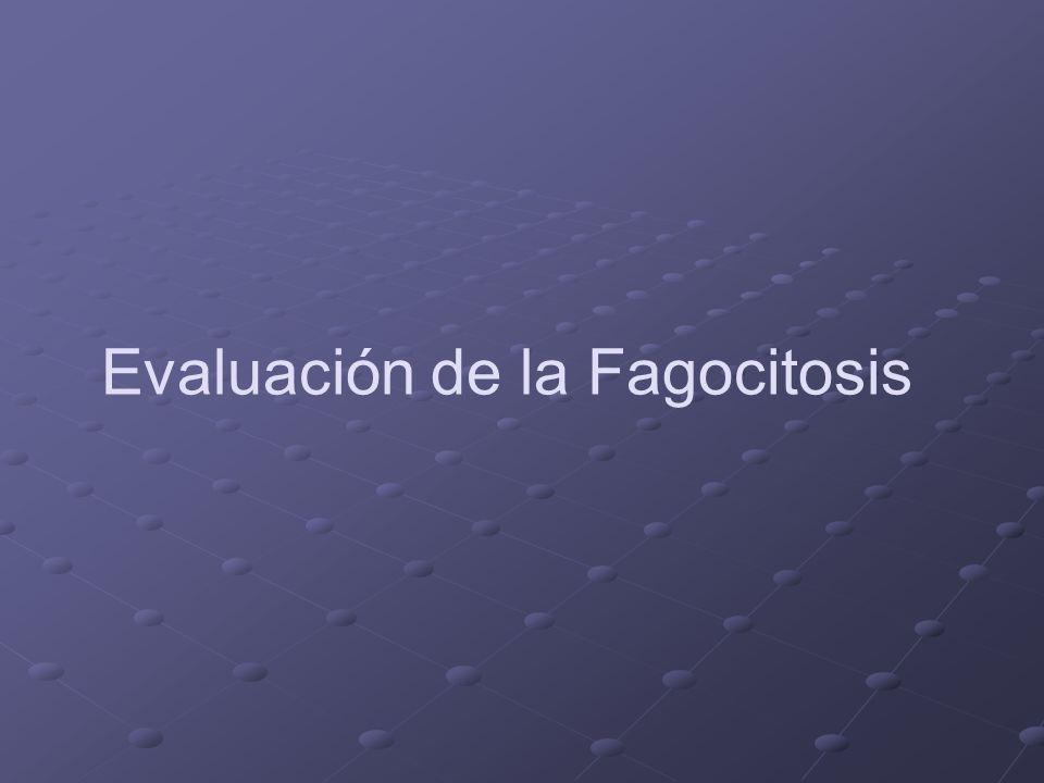 Evaluación de la Fagocitosis