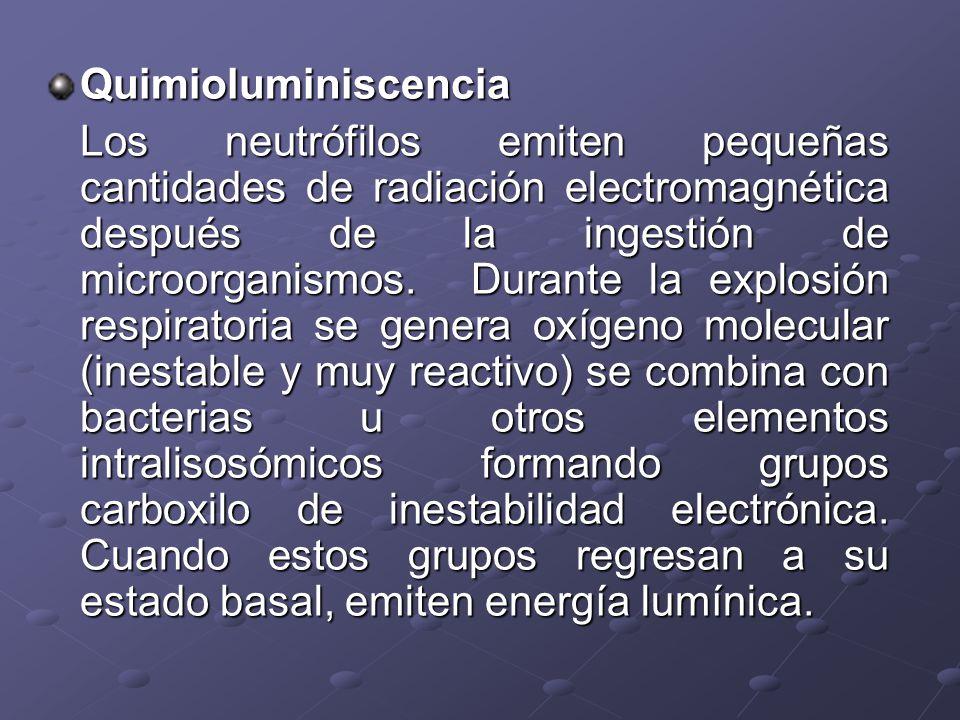 Quimioluminiscencia Los neutrófilos emiten pequeñas cantidades de radiación electromagnética después de la ingestión de microorganismos. Durante la ex