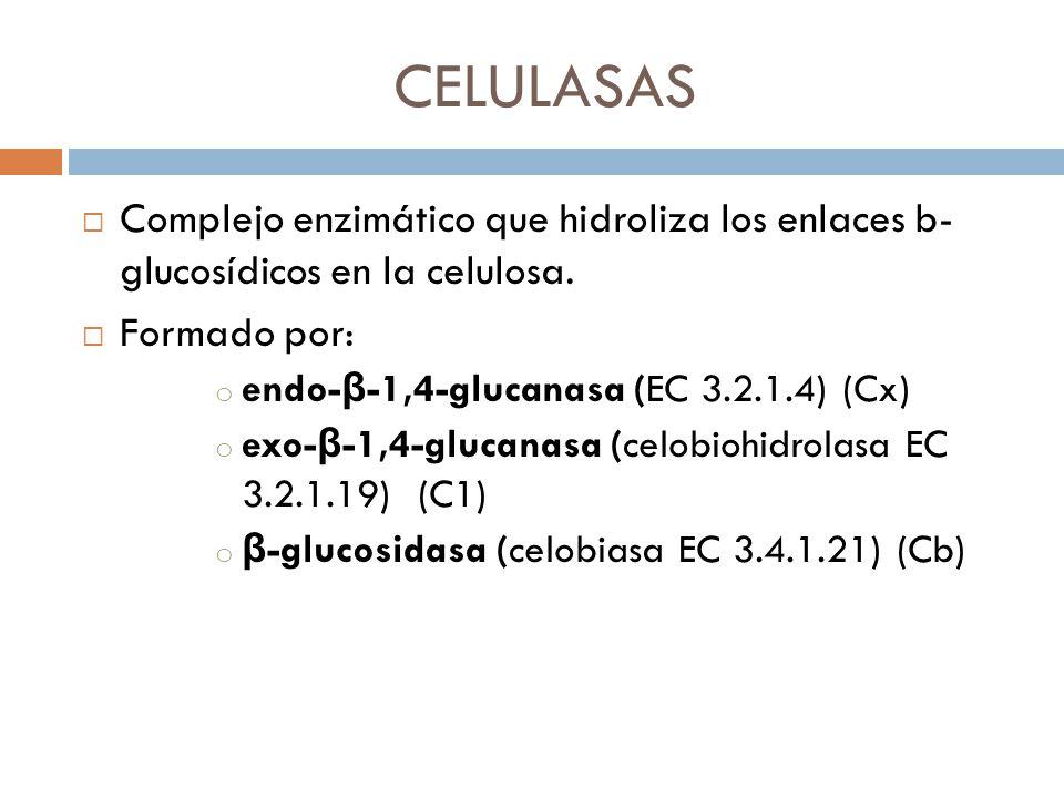 CELULASAS Complejo enzimático que hidroliza los enlaces b- glucosídicos en la celulosa. Formado por: o endo- β -1,4-glucanasa (EC 3.2.1.4) (Cx) o exo-