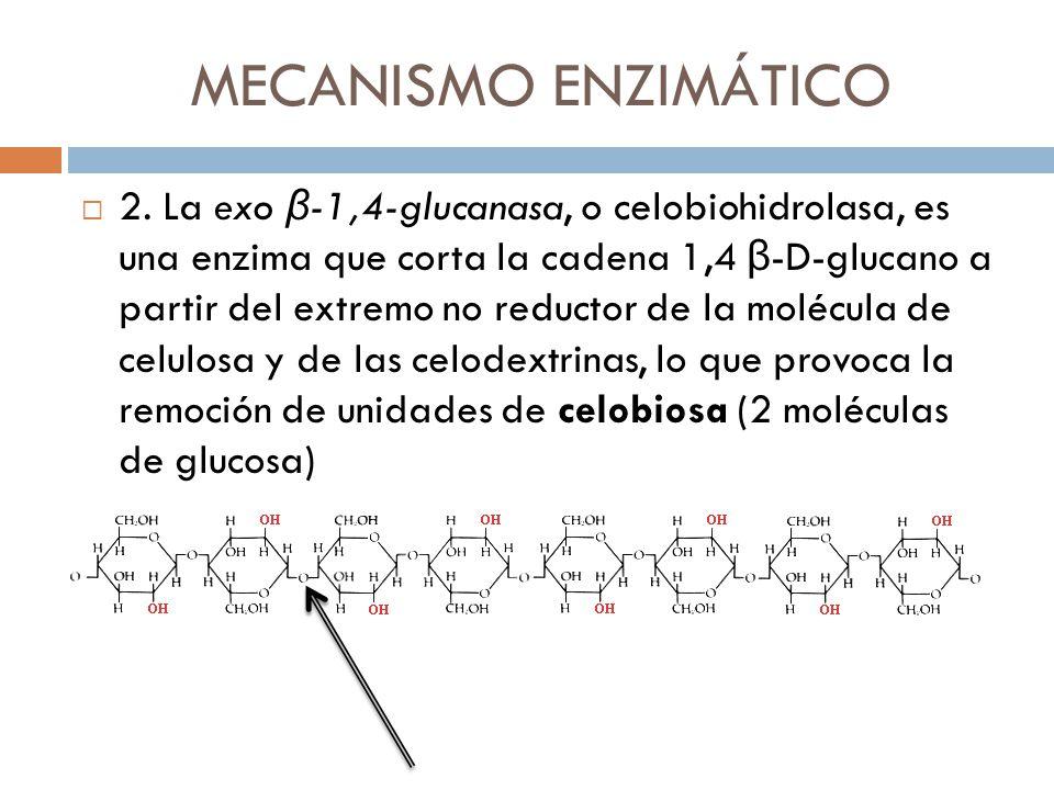 MECANISMO ENZIMÁTICO 2. La exo β -1,4-glucanasa, o celobiohidrolasa, es una enzima que corta la cadena 1,4 β -D-glucano a partir del extremo no reduct