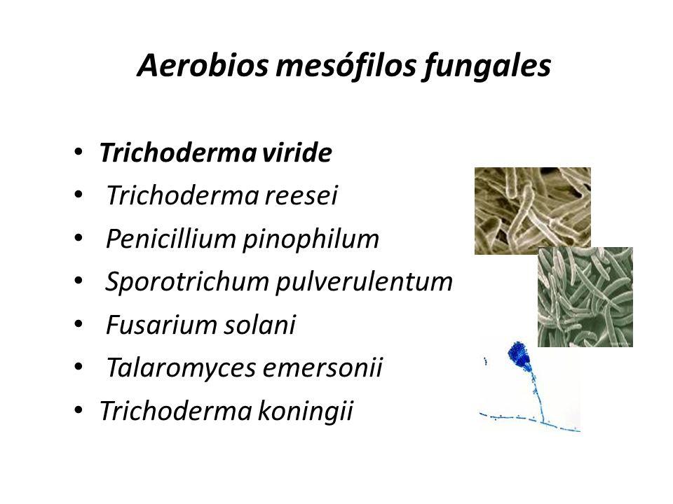 Aerobios mesófilos fungales Trichoderma viride Trichoderma reesei Penicillium pinophilum Sporotrichum pulverulentum Fusarium solani Talaromyces emerso