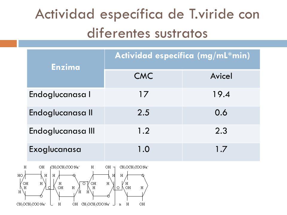 Actividad específica de T.viride con diferentes sustratos Enzima Actividad específica (mg/mL*min) CMCAvicel Endoglucanasa I1719.4 Endoglucanasa II2.50