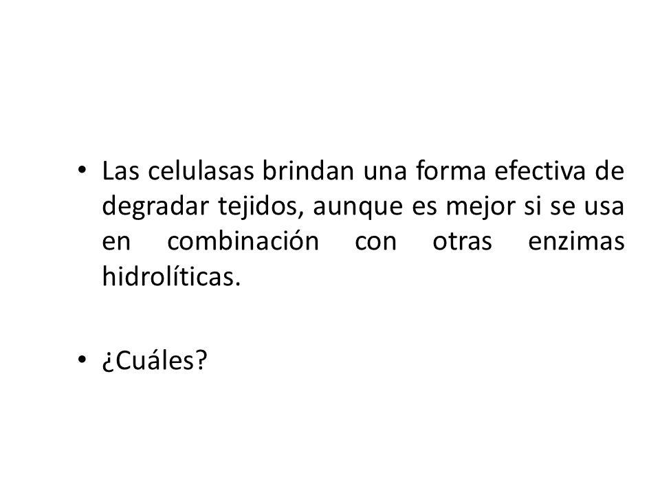 Las celulasas brindan una forma efectiva de degradar tejidos, aunque es mejor si se usa en combinación con otras enzimas hidrolíticas. ¿Cuáles?