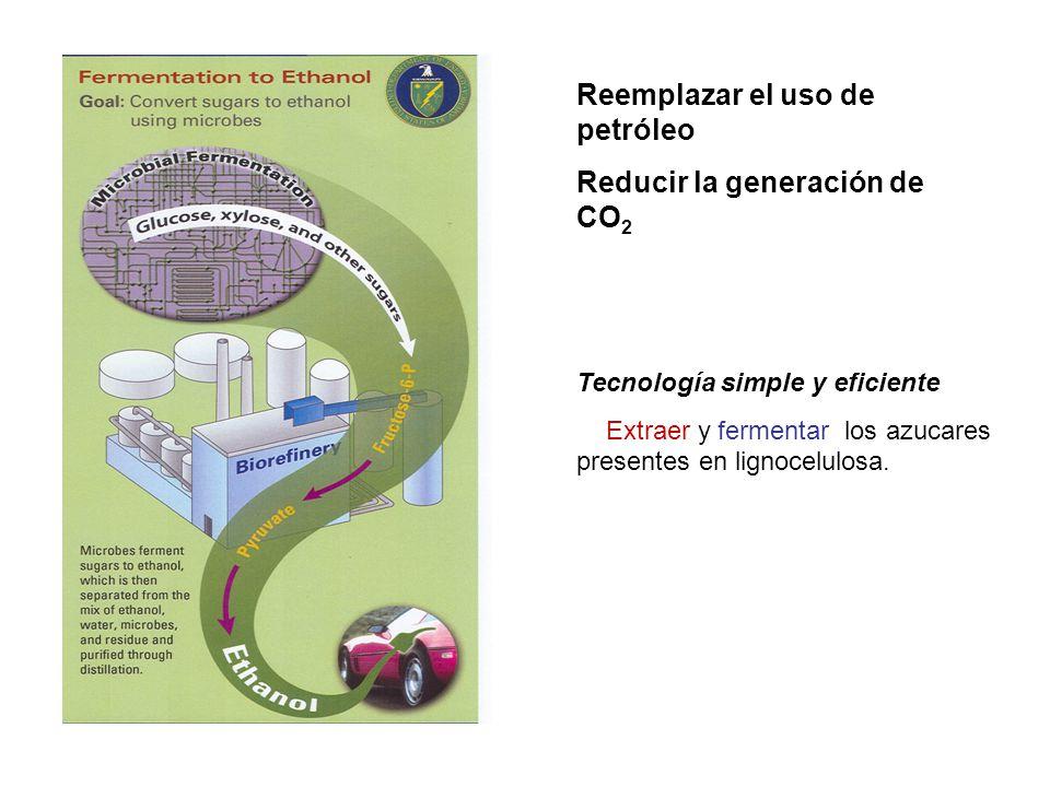 Reemplazar el uso de petróleo Reducir la generación de CO 2 Tecnología simple y eficiente Extraer y fermentar los azucares presentes en lignocelulosa.