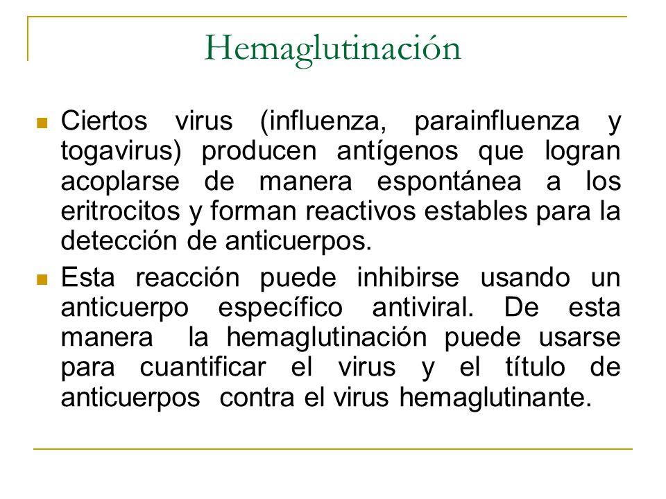 Hemaglutinación Ciertos virus (influenza, parainfluenza y togavirus) producen antígenos que logran acoplarse de manera espontánea a los eritrocitos y