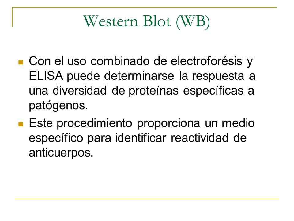 Western Blot (WB) Con el uso combinado de electroforésis y ELISA puede determinarse la respuesta a una diversidad de proteínas específicas a patógenos