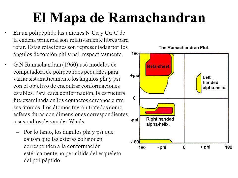 El Mapa de Ramachandran En un polipéptido las uniones N-Cα y Cα-C de la cadena principal son relativamente libres para rotar. Estas rotaciones son rep