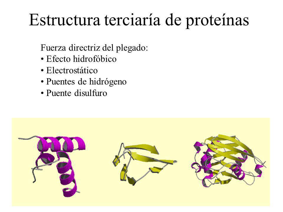 Estructura terciaría de proteínas Fuerza directriz del plegado: Efecto hidrofóbico Electrostático Puentes de hidrógeno Puente disulfuro