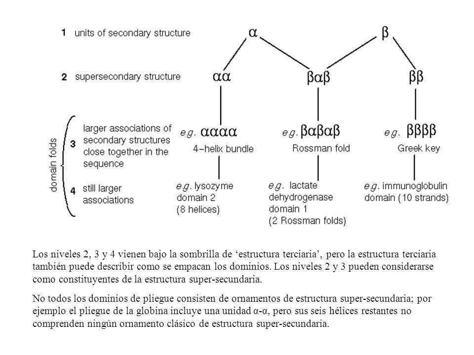 Los niveles 2, 3 y 4 vienen bajo la sombrilla de estructura terciaria, pero la estructura terciaria también puede describir como se empacan los domini