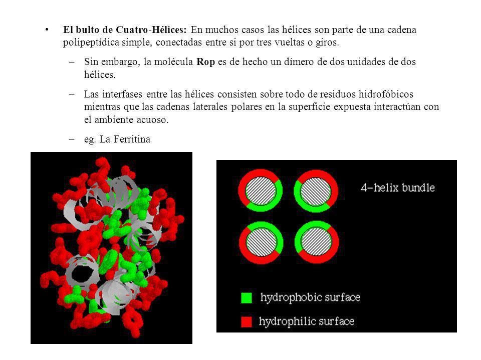 El bulto de Cuatro-Hélices: En muchos casos las hélices son parte de una cadena polipeptídica simple, conectadas entre si por tres vueltas o giros. –S