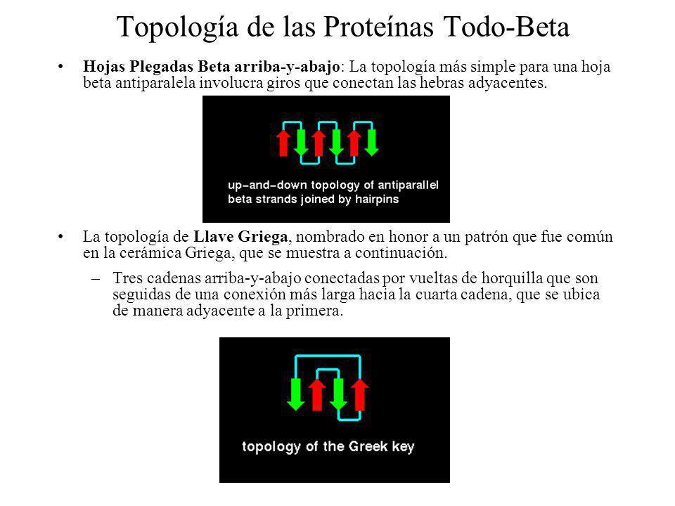 Topología de las Proteínas Todo-Beta Hojas Plegadas Beta arriba-y-abajo: La topología más simple para una hoja beta antiparalela involucra giros que c