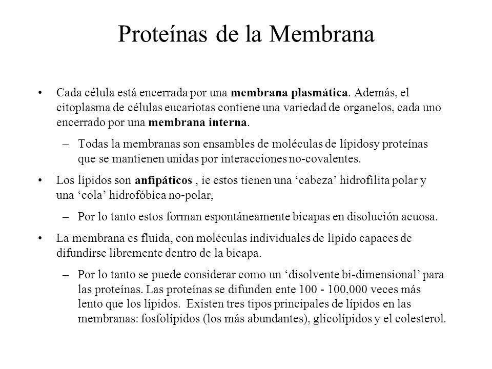 Proteínas de la Membrana Cada célula está encerrada por una membrana plasmática. Además, el citoplasma de células eucariotas contiene una variedad de