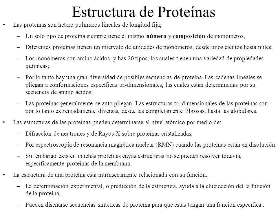 Estructura de Proteínas Las proteínas son hetero polímeros lineales de longitud fija; –Un solo tipo de proteína siempre tiene el mismo número y compos