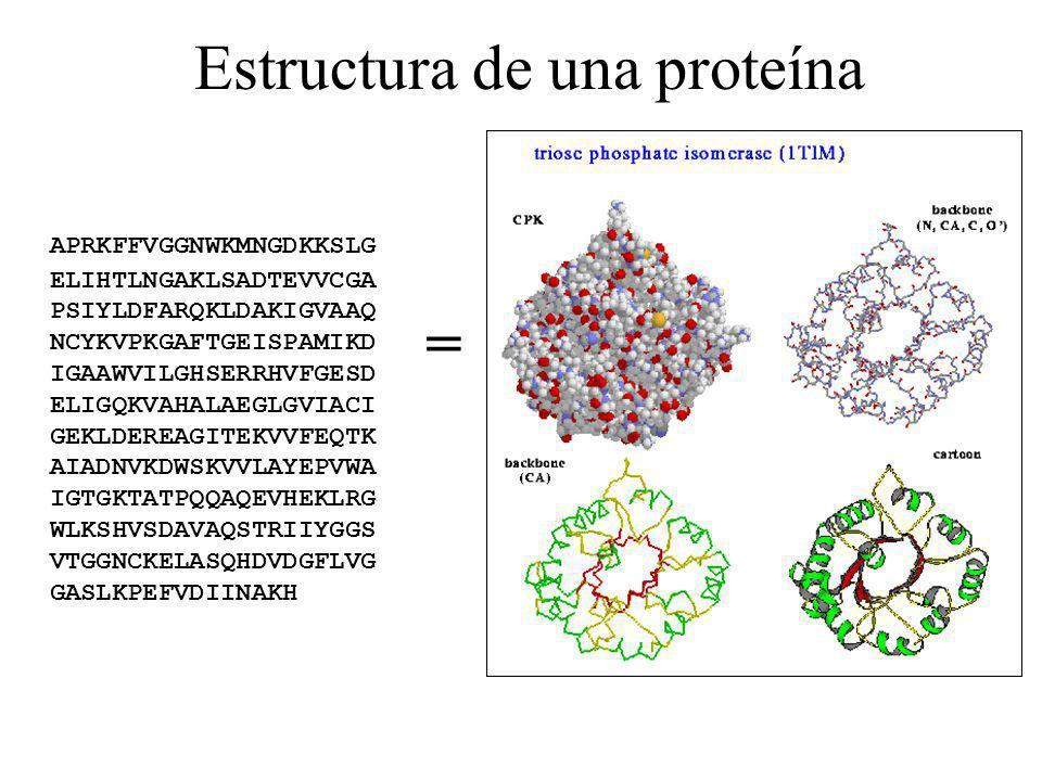 Estructura de una proteína APRKFFVGGNWKMNGDKKSLG ELIHTLNGAKLSADTEVVCGA PSIYLDFARQKLDAKIGVAAQ NCYKVPKGAFTGEISPAMIKD IGAAWVILGHSERRHVFGESD ELIGQKVAHALAE