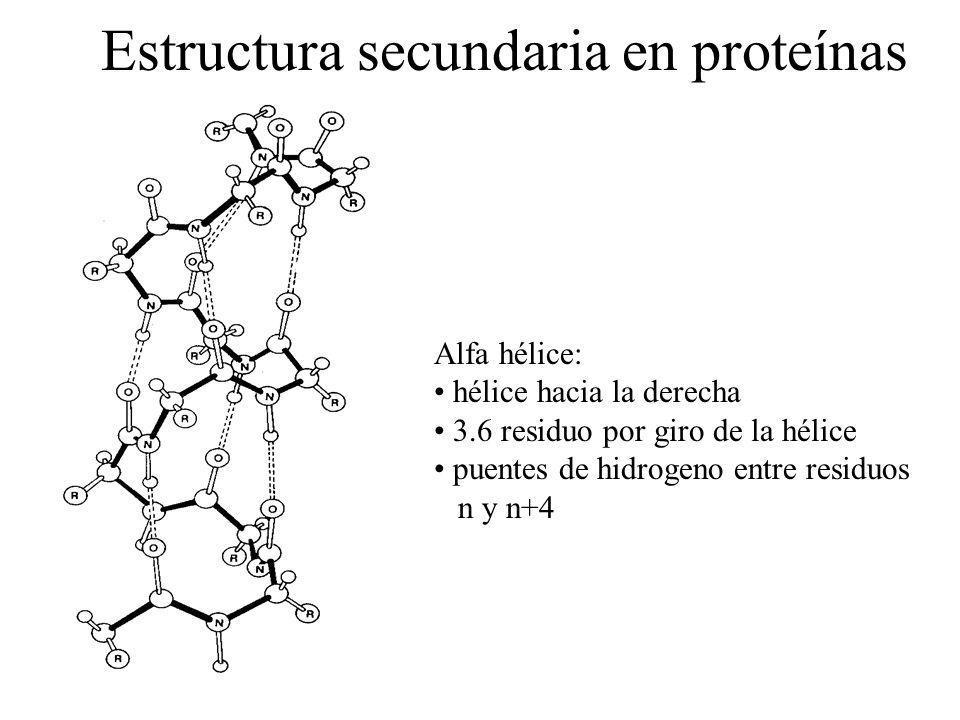 Estructura secundaria en proteínas Alfa hélice: hélice hacia la derecha 3.6 residuo por giro de la hélice puentes de hidrogeno entre residuos n y n+4
